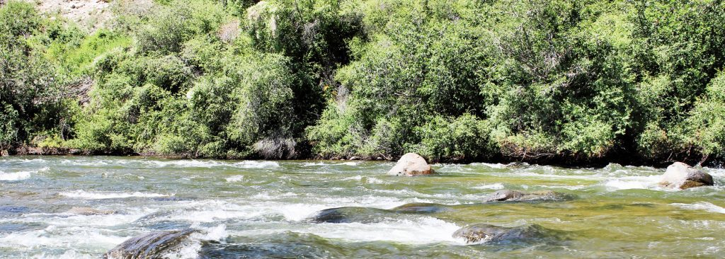 Where Gold Medal Trout whitewater offers endless opportunity for recreation